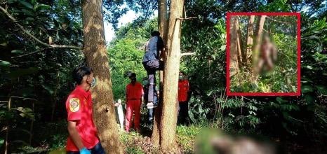 พบศพชายผูกคอเสียชีวิตคาต้นไม้ในป่าที่ตากใบ