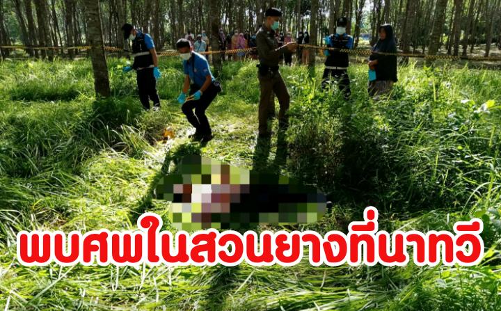 พบศพชาวบ้านนอนเสียชีวิตในสวนยางที่นาทวี